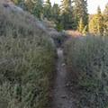 Singletrack.- San Jacinto Peak via Marion Mountain Trail