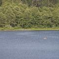 Angler on Deer Lake.- Bench Campground