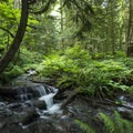 Forest foliage and creek along the trail en route to Bridal Veil Falls.- Bridal Veil Falls