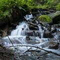 Forest foliage and creek along trail en route to Bridal Veil Falls.- Bridal Veil Falls