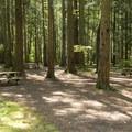 Sunnyside Campground.- Sunnyside Campground