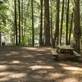 Typical tent campsite at Sunnyside Campground.- Sunnyside Campground