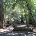 Typical campsite at Redwood Campground.- Redwood Campground