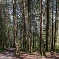 North Beach Trail.- North Beach, Alouette Lake