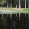 Eastern shore of Cranberry Lake.- Cranberry Lake