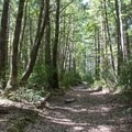 Into the woods.- Big Tree Trail