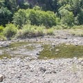 Following the Big Tree Trail necessitates some manageable fording of the South Fork Eel River.- Big Tree Trail