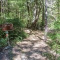 Make sure to check out the Miles Standish Tree, just a stone's throw off of the Big Tree Trail.- Big Tree Trail