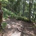 Trail to Lottie Bay.- Lottie Bay