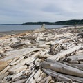 Lots of driftwood lines the shore.- Windjammer Park