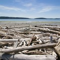 Lots of driftwood along the shore. - Similk Beach