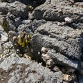 Tidepools to explore along the beach.- West Beach