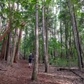 You will probably share the trail on this hike, which is popular with local residents.- Waihou Spring Trail