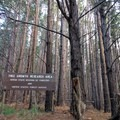 This sign welcomes you to the forest.- Waihou Spring Trail