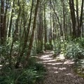 Nearby hiking trails explore the forests of Standish-Hickey State Recreation Area.- Rock Creek Campground