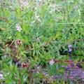 Each season brings different plants in bloom.- Hosmer Grove