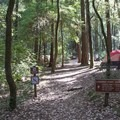 Richardson Grove offers multiple trail options to explore the park's 2,000 acres.- Richardson Grove State Park
