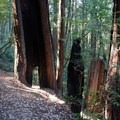 - Richardson Grove State Park