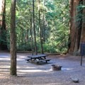 Typical campsite in Richardson Grove State Park.- Richardson Grove State Park