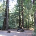 Typical site at Huckleberry Campground.- Huckleberry Campground