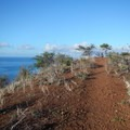 Suddenly a trail appears at the top of the hill.- Pu'u Ola'i / Red Hill