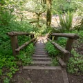 Stairs lead from the campground to the South Santiam.- Fernview Group Campground