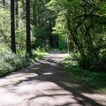 The campground road.- Fernview Group Campground
