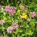 Wildflowers bloom on the bank in spring.- Sharps Creek Recreation Area Swimming Hole