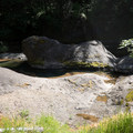 Rock formations near the upper pool.- Sharps Creek Recreation Area Swimming Hole