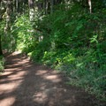 A small trail system in Baker Bay.- Baker Bay Park, Dorena Reservoir
