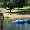 The swimming area in Baker Bay.- Baker Bay Park, Dorena Reservoir