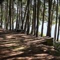 A site by Dorena Lake.- Baker Bay Campground, Dorena Reservoir