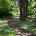 The path leading up toward the dam.- Riverside Park, Cottage Grove Lake