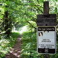 The Salmon Creek Trail leaves from the campground.- Salmon Creek Falls Campground