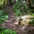 Trails run along the creek.- Salmon Creek Falls Swimming Holes