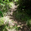 The access trail to the river is quite steep.- North Fork Middle Fork Willamette Swimming Hole 5.5