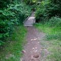 Short trails access the water along the bank.- Hendricks Bridge Park