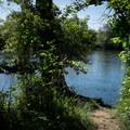 The McKenzie River awaits.- Camp Creek Road Waterworks Swimming Hole