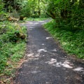 Trails lead into the woods where individual picnic sites are available.- Shotgun Creek Recreation Area