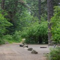 The sites are well protected by the forest understory.- Whitetail Campground