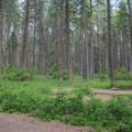 A typical site at Whitetail Campground.- Whitetail Campground