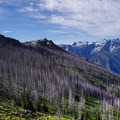 Burned out forest below the ridge, on the south-facing slope. - Icicle Ridge via Fourth of July Creek Trail