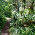 Easy access trail to Molalla River for swimming.- Day Use Site 2: Molalla River Swimming