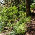 Short trail down to the water for the Molalla River.- Day Use Site 2: Molalla River Swimming