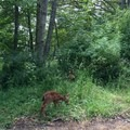 Fauns grazing near the entrance of the park.- San Juan County Day Park + Campground