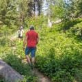 The Summit Trail at Tubbs Hill leads to the top of the hill.- Tubbs Hill Hiking Trails