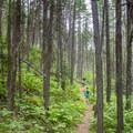 Highpoint Trail.- Highpoint Trail