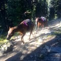 There May be Frequent Encounters with mule trains on the trail.- Mirror Lake via the East Lostine River Trail