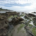Tide pools at Yachats Ocean Road Beach.- Yachats Ocean Road State Natural Site