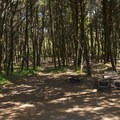 Campsite at Tillicum Beach Campground.- Tillicum Beach Campground